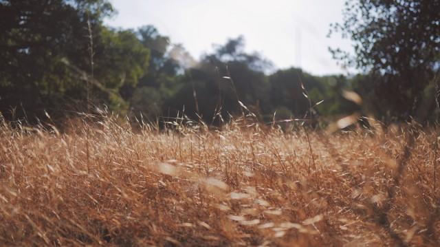 Jumala uskoa synnyttävä pelto. Cole Patrick@Unsplash.com. CC0.